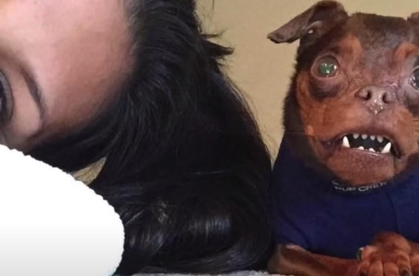 """Perrito con deformidades especiales era catalogado como """"el más feo"""", fue por fin adoptado"""