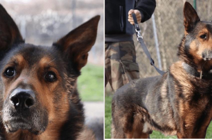 Un refugio crea una campaña de adopción para un perro anciano que no lo quieren adoptar por su edad