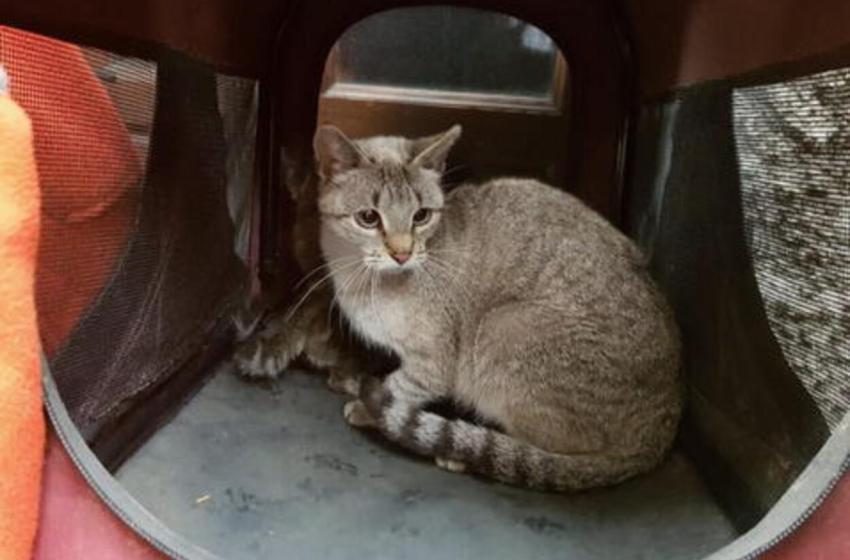 Gatita fue abandonada y encerrada durante dos meses en un apartamento por sus antiguos dueños