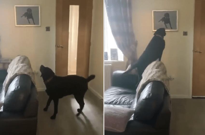 Pintaron al perrito fallecido de una familia y su hermano lo reconoció (VIDEO)