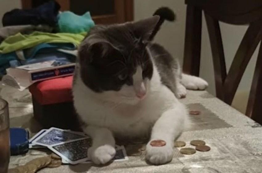 Inteligente gatito hace 'truco de magia' con una moneda y conquista a todo el mundo( VIDEO)