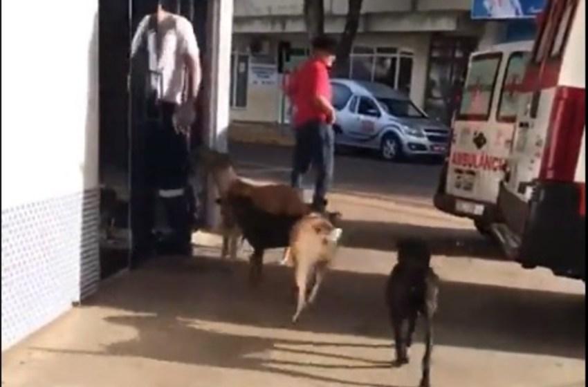 Perros llegan jadeantes al hospital persiguiendo la ambulancia que se llevó a su dueño sin hogar