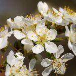 Cómo afecta la primavera a los niños