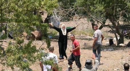 PEMUKIM ISRAEL SERANG PRIA PALESTINA DI KEBUN ZAITUN