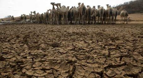 Ilmuwan Kenya Kembangkan Asuransi Ternak Atasi Krisis Kekeringan