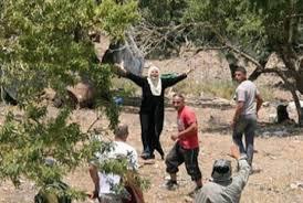 Pasukan Israel Larang Petani Palestina Memanen Zaitun