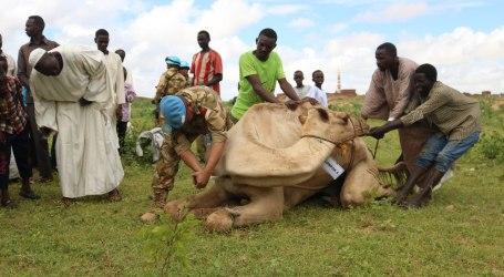 Satgas Yon Komposit TNI Konga Rayakan Idul Adha di Sudan