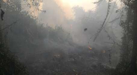 Selama 2019, 843 Hektar Lahan di Riau Terbakar