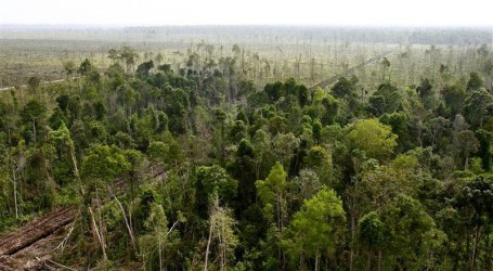 Hutan Rawa Gambut Tripa Hanya Tersisa 5.000 Hektare