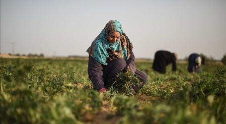 Fatimah Atalla, Derita Keluarga Palestina