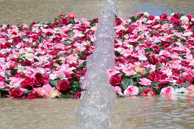 festival_roses_lyon_askaelle_6