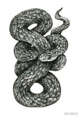 snake_sketch_misspaty