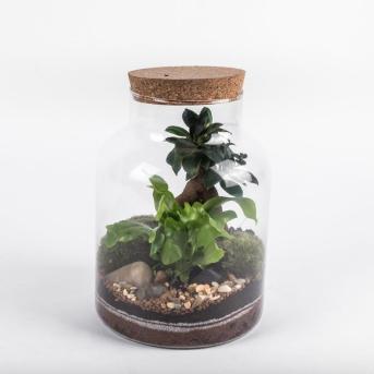 Kit terrarium