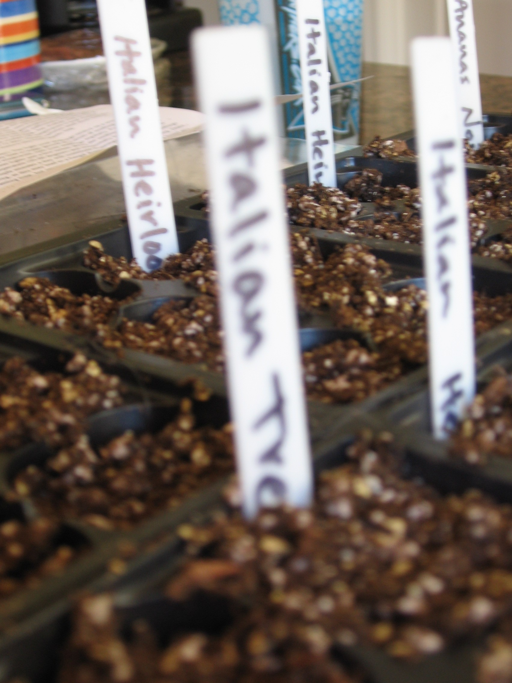 Trays with Seedlings