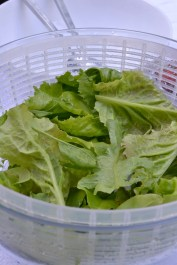 Freshly picked and washed mixed greens