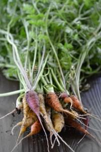 Carrots (www.mincedblog.com)