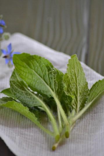 Borage Leaves (www.mincedblog.com)