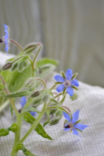 Borage flowers (www.mincedblog.com)