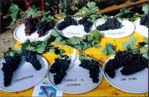 Piante e animali perduti uve