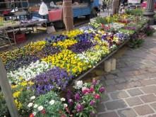 Dillo coi fiori 2
