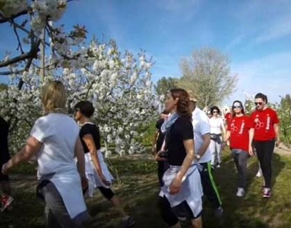 Passeggiata tra i ciliegi
