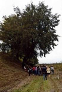 albero-della-morte