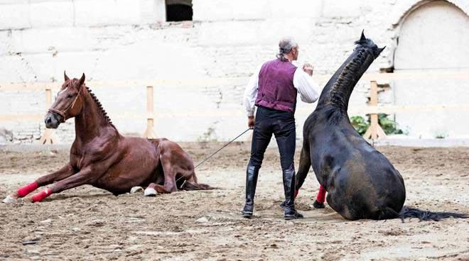 giovanni-lindo-ferretti- e i suoi cavalli.jpg