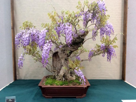 bonsai2 (1)
