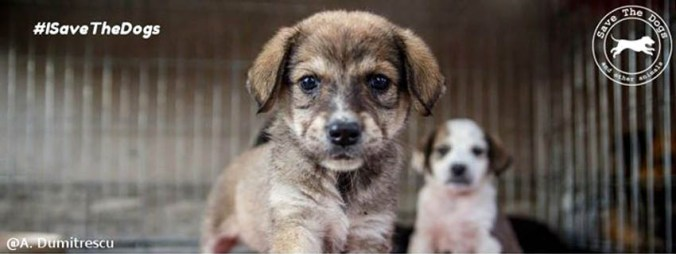 Hoppipolla per Save the Dogs Onlus.jpg