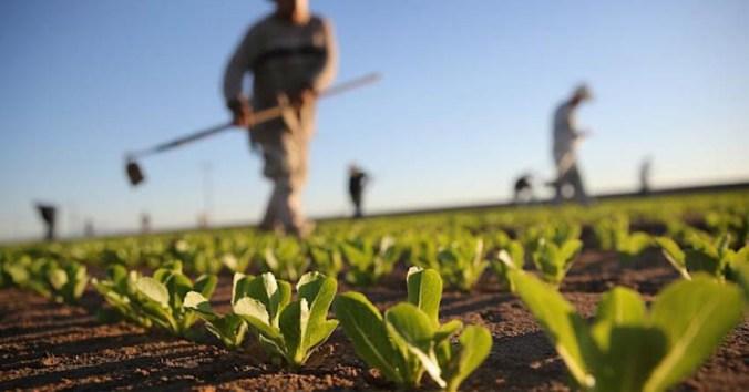 sicurezza per i lavoratori dipendenti agricoli e agrituristici