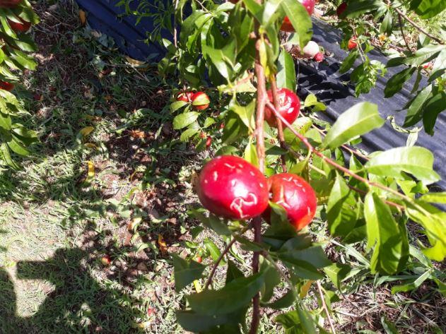 coltivazioni distrutte dal maltempo