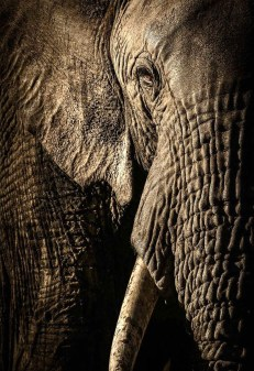 The power of the matriarch © David Lloyd