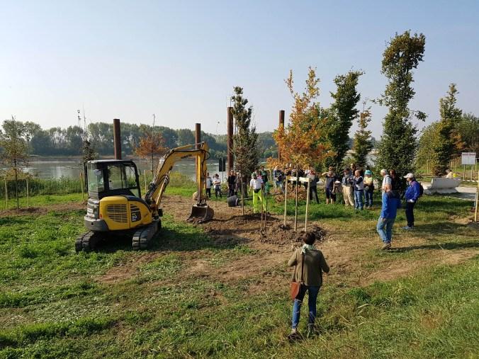 Parco del Mincio scavi e piantumazione alberi.jpg