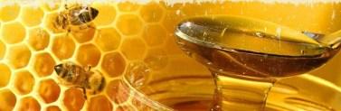 apicoltura lombardia