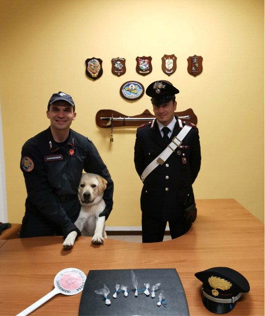 carabinieri nucleo cinofili orio al serio cane grom.jpg