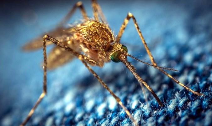 pericolo zanzare