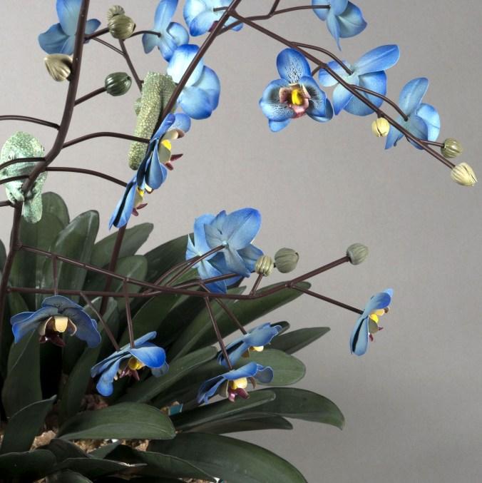 particolare di orchidea - BERTOZZI&CASONI