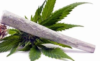 spinello marijuana