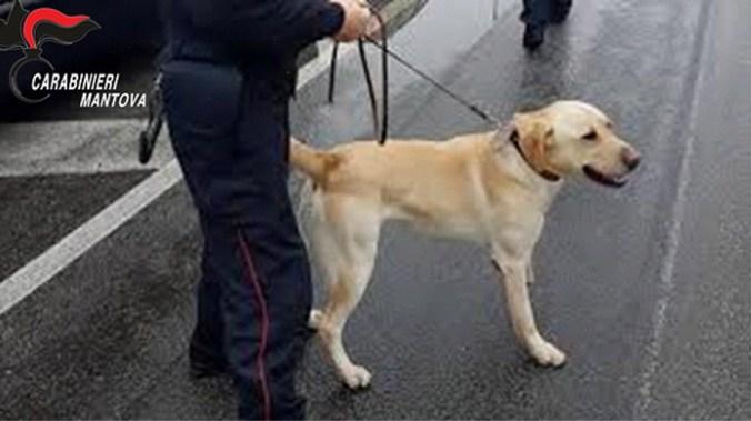 grom labrador Carabinieri