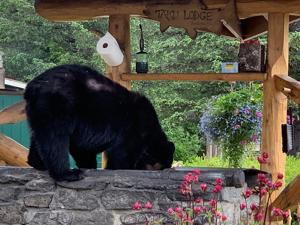 black bear on top of outdoor grill
