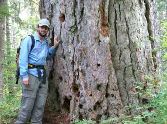 Me and a very old Douglas-fir