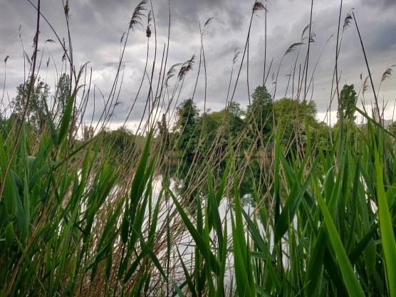 Mindandbeauty : Balade au lac de Créteil : Verdure