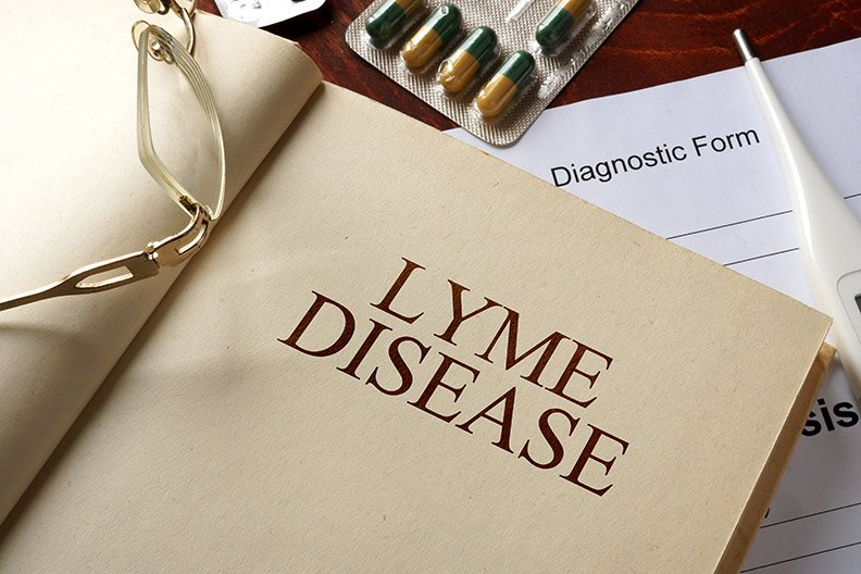 lyme disease teasel root