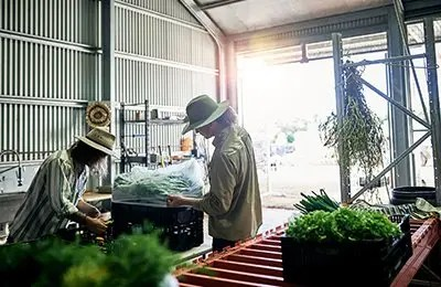 Two male farmers packing produce in their warehouse on the farm for a food retailer