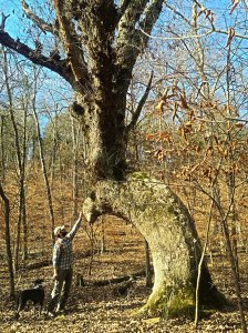 Man with a dog touching a large old tree named the devil tree becuase of its sinister appearance.