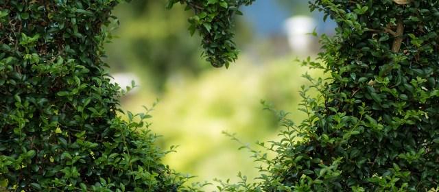 Da raiva ao amor: a arte da auto-intervenção