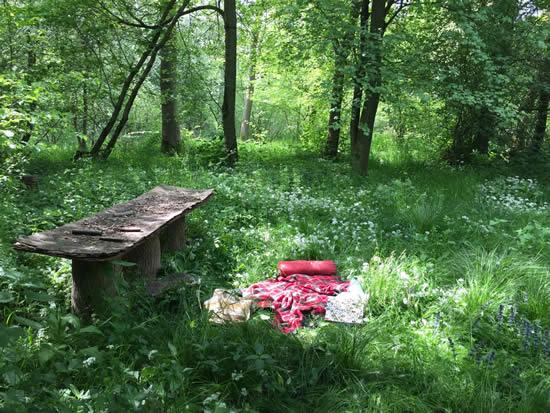 blanket on ground in woodland