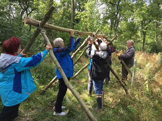 adults raising wood structure