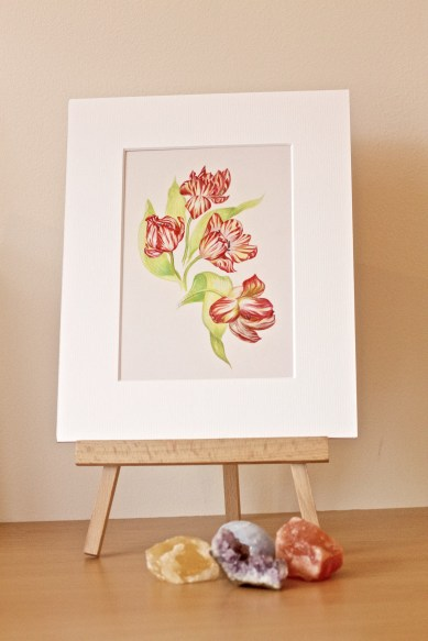 Fout elegant tulips, detailed, print with mount, packed in protective cellophane