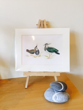 Two lapwings, taking care of their nest (two eggs), print with mount, packed in protective cellophane
